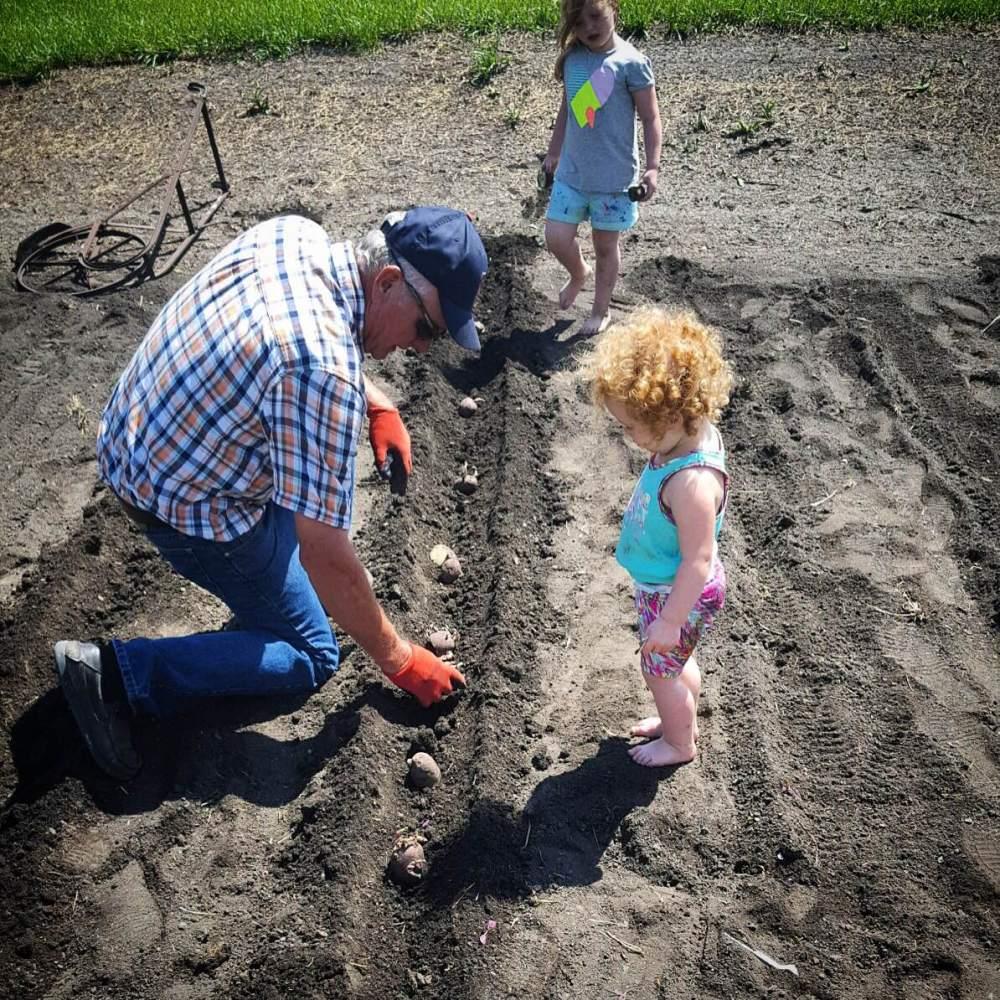Papa planting